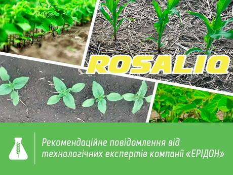 rosaliq-sunflower-maize-soybean.jpg