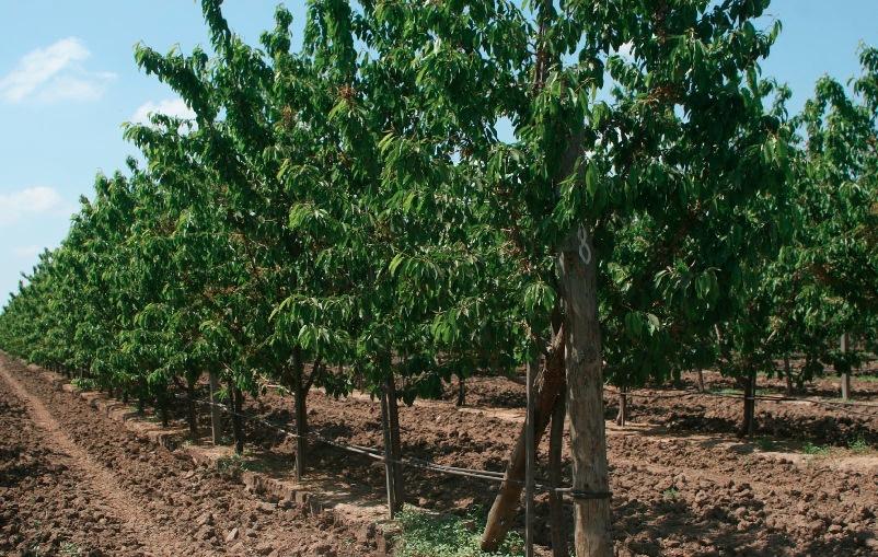 Картинки по запросу агрофірма радгосп білозерський фото